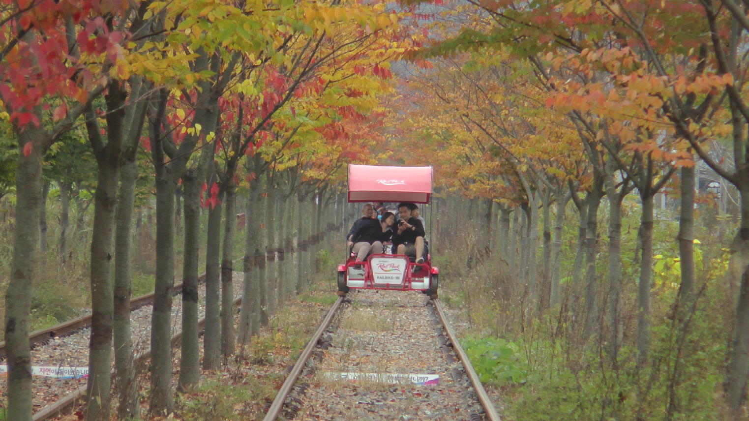 Nami Island + Petite France + Gangchon Rail Bike One Day Tour