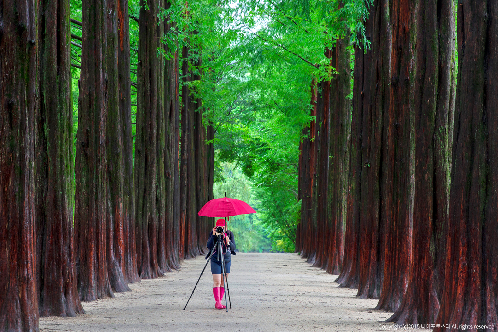 Nami Island + Petite France One Day Tour