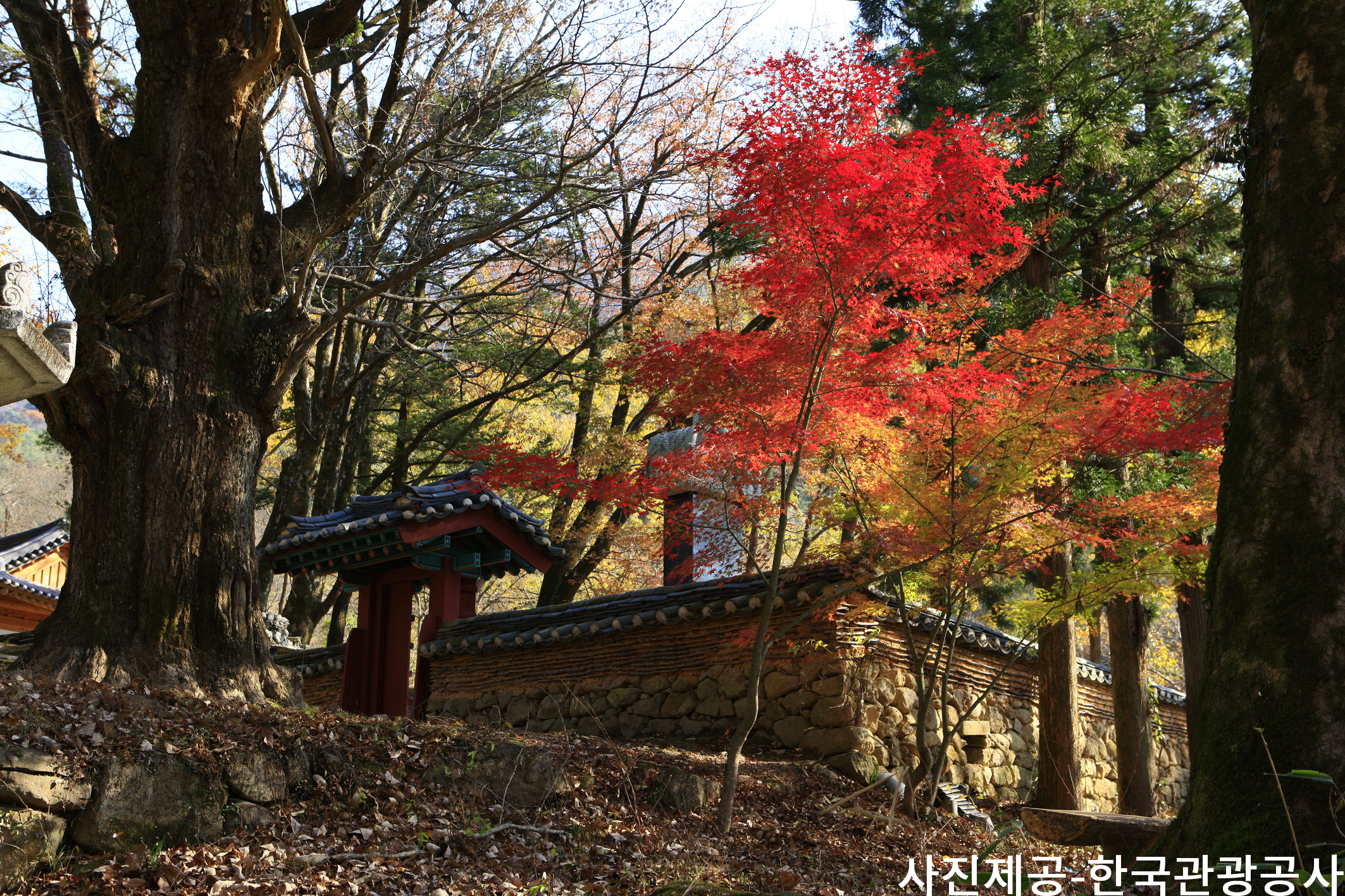 (Autumn) Jirisan National Park Foliage One Day Tour