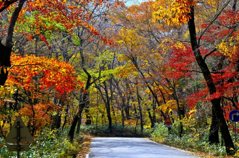 (Autumn) Gayasan National Park (Haeinsa) Foliage One Day Tour