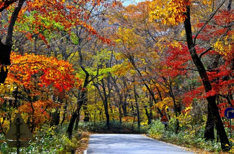 (秋季) 伽倻山國立公園(海印寺)賞楓一日遊