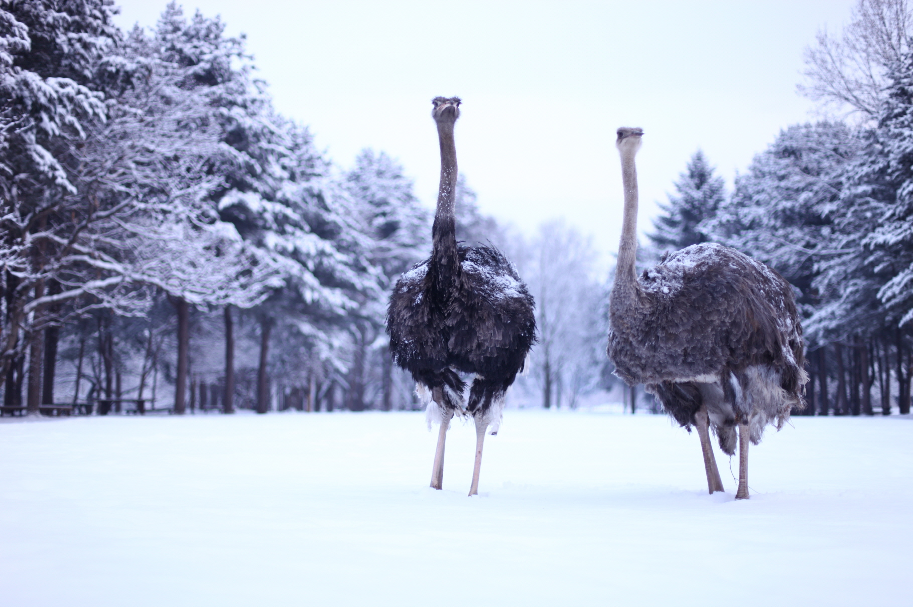 (Winter) Nami Island + The Garden of Morning Calm One Day Tour