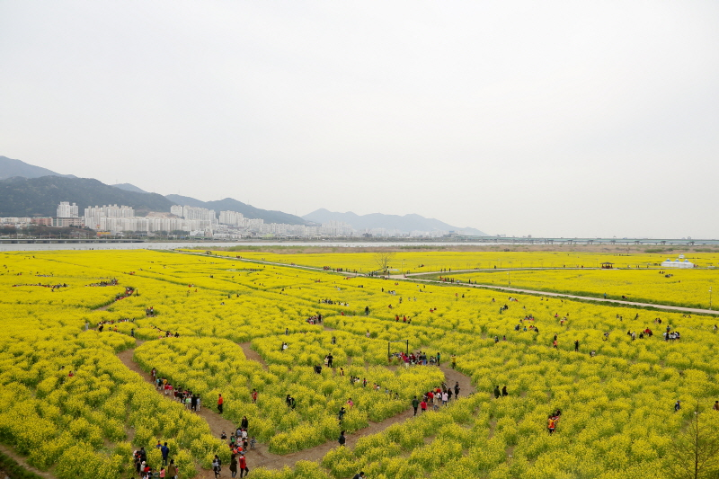 (Spring) Busan Canola Festival Half-day Tour (Day)