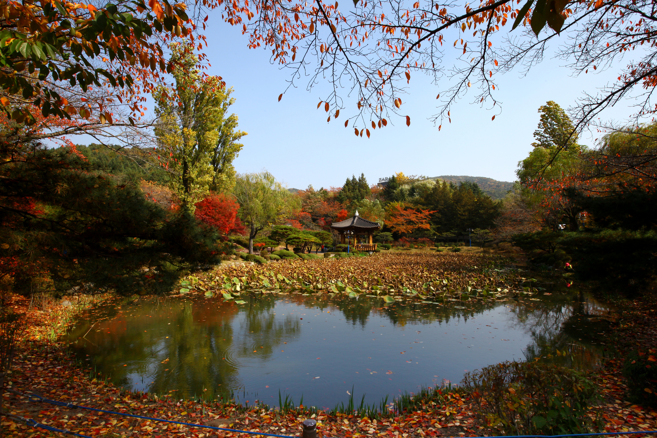 (Autumn) Gyeongju Foliage One Day Tour - Depart from Daegu