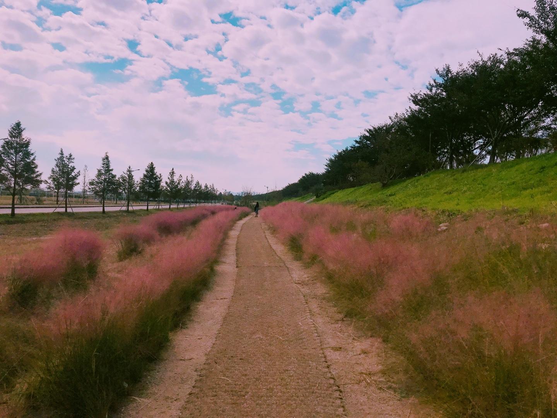 (秋季) 釜山粉紅芒草一日遊