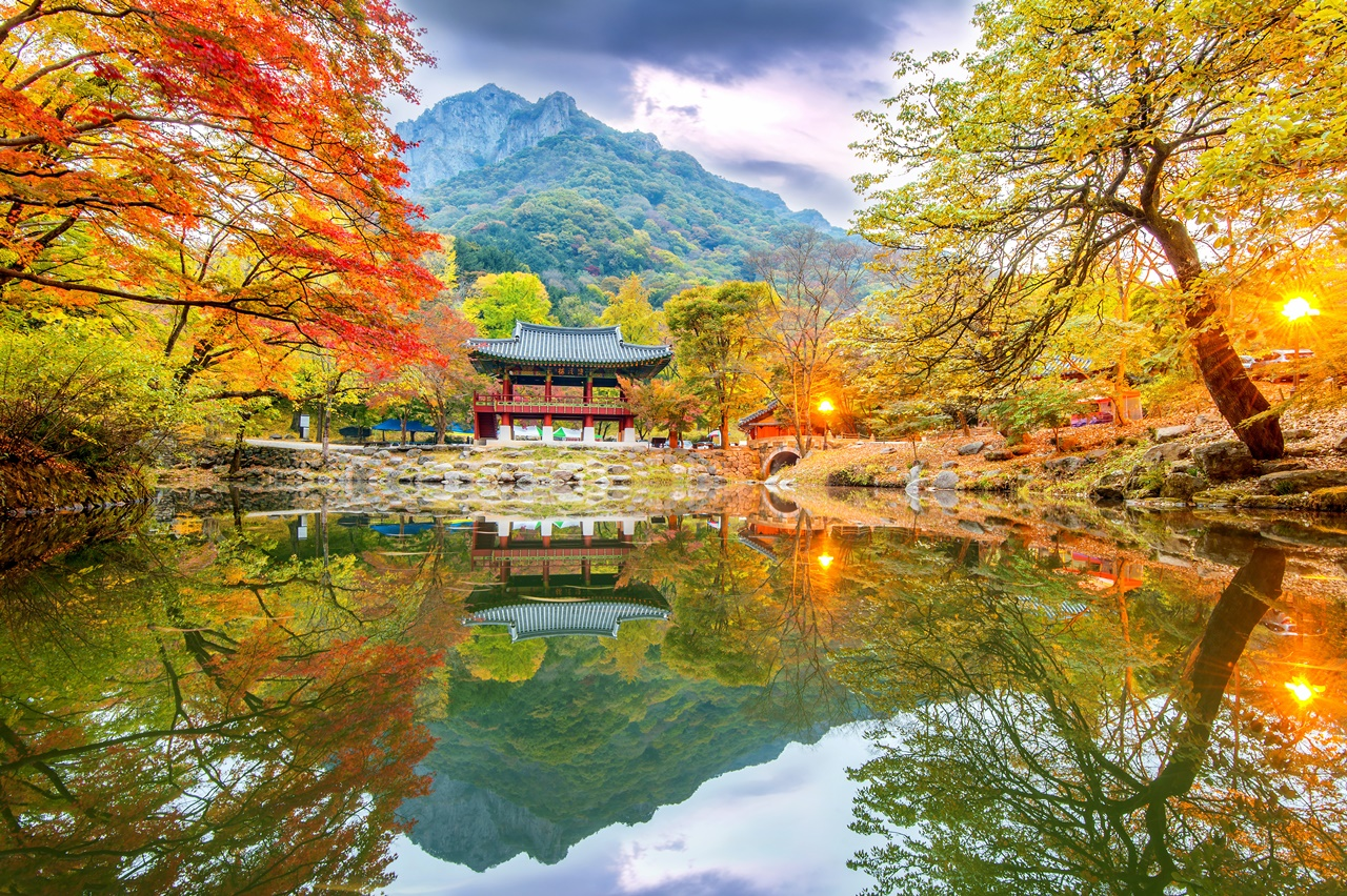 (Autumn) Magnificent Naejangsan National Park Foliage One Day Tour - Depart from Daegu